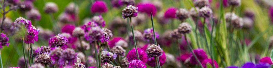 Цветы в Новой Голландии в Санкт-Петербурге