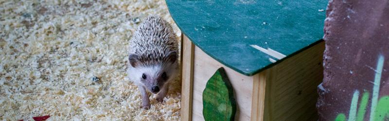 Контактный зоопарк в Теплом стане