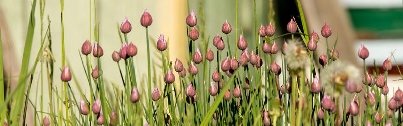 Весна на даче: трава и цветы