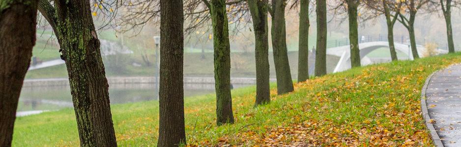 Обновленный парк Олимпийской деревни в тумане